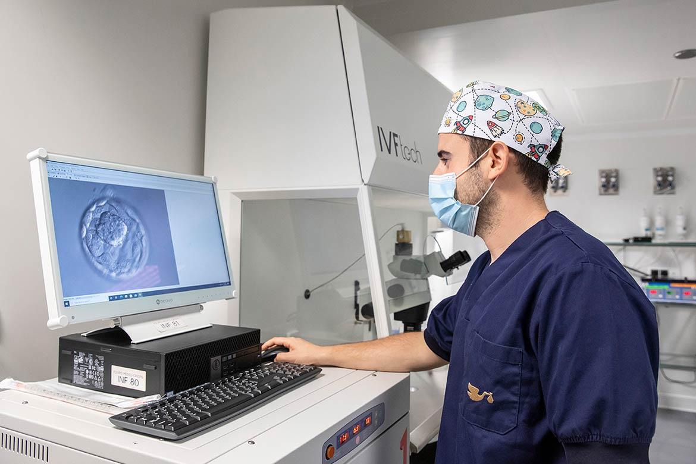 processo impianto embrione